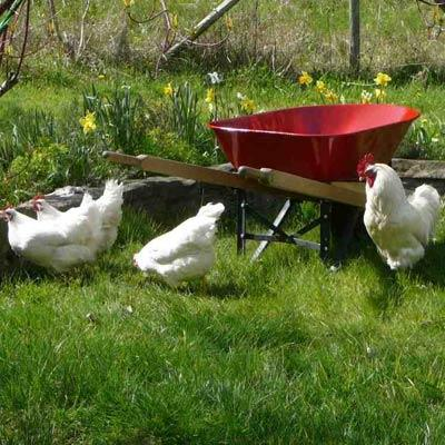 the red wheelbarrow analysis The red wheelbarrow so much depends upon a red wheel barrow glazed with rain water beside the white chickens –william carlos williams this poem is i want meaning, too does this poem mean something in a graduate/ undergraduate modern poetry class i took as a grad student, an upper class.