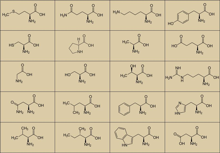 list of 20 amino acids and structures pdf